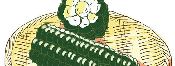伝統野菜 黒姫もちもろこし